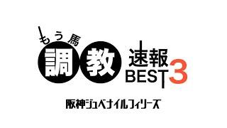 【競馬予想】阪神ジュベナイルフィリーズ 2020 最終追い切り評価BEST3・1強?今年は荒れそうな予感!