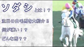 白毛馬ソダシを大紹介!! 元馬術選手のコラム【競馬】