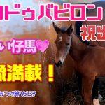 【競馬・仔馬・馬主】愛馬エリドゥバビロンが出産!仔馬が可愛い💖いい馬みつけ旅(Vol037)