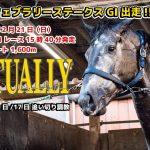 【フェブラアリーステークス】矢野厩舎・ミューチャリー(船橋競馬) 追い切り映像【ドローン】