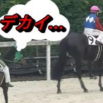 成長が止まらない!ついに日本競馬史上最重量での勝利、ホントに他の馬と同じサラブレットなの?【グラシーナ】